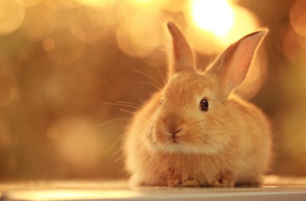 bunny-..._by_Essa-Al-Mazrooei600_395