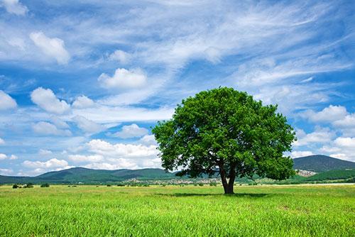 lone-tree-horizon